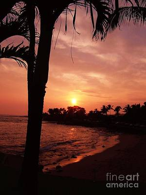 Photograph - Aloha by Terri Thompson