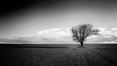 Photograph - Alone 05/12/2017 by Plamen Petkov