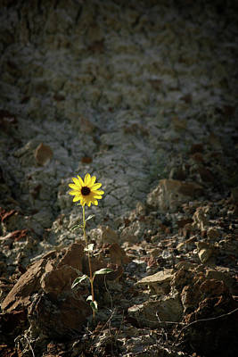 Photograph - Alone - 365-328 by Inge Riis McDonald