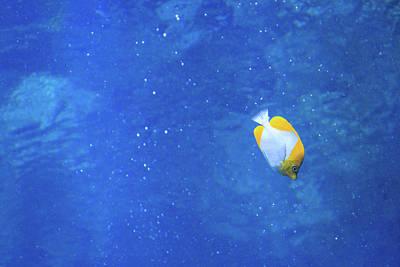 Photograph - Alone Again Butterflyfish by Bonnie Follett
