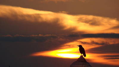 Jak Photograph - Alone At Dawn by Jack Norton