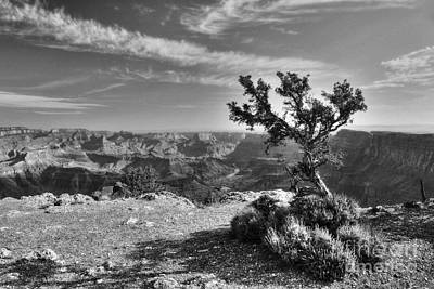 Photograph - Alone At The Top Bw by Mel Steinhauer