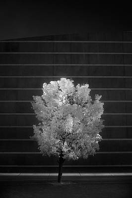Photograph - Alone by Brian Duram