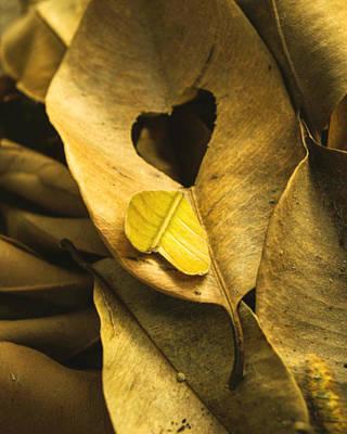 Alone Hearts Original by Faiqe Sumer