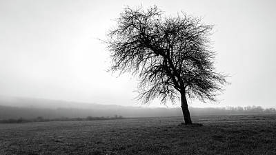Photograph - Alone In A Field by Andrew Pacheco