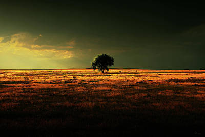Photograph - Alone In Sublime Light by Brian Gustafson