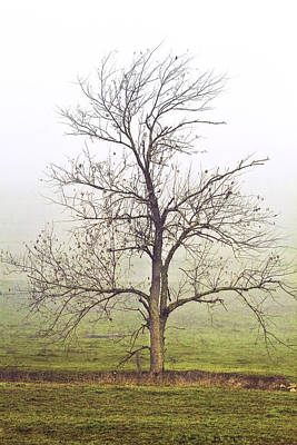 Alone Photograph - Alone In The Mist by Marcia Colelli