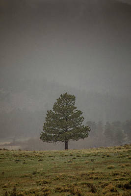 Photograph - Alone In The Mist by Teresa Wilson