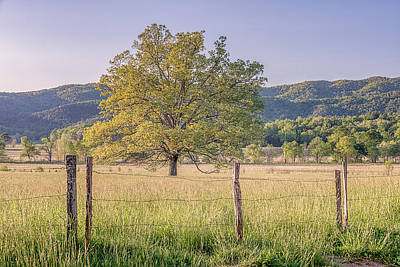Photograph - Alone In The Pasture by Jeff Abrahamson