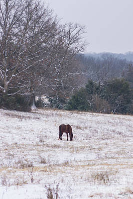 Photograph - Alone In The Snow by Jennifer White