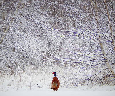 Pheasant Photograph - Alone In The Snow by Karen Cook