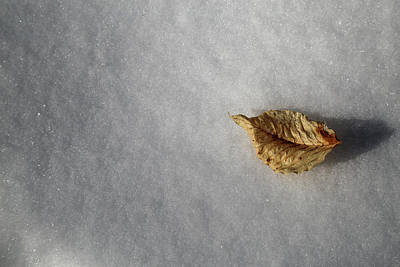 Photograph - Alone In The Snowy Woods by Mary Bedy