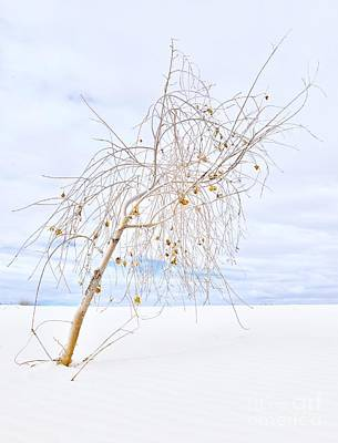 Photograph - Alone In White Sands by Glennis Siverson