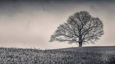 Photograph - Alone Oak by Kelvin Trundle