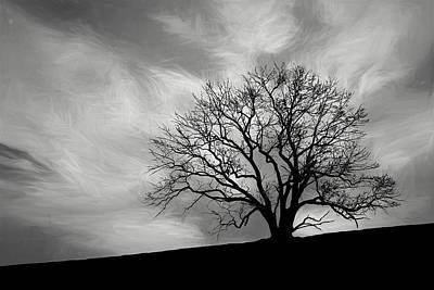 Grey Photograph - Alone On A Hill In Black And White by Tom Mc Nemar