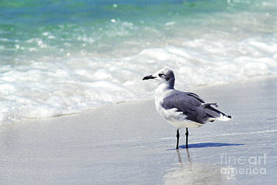 Herring Gull Photograph - Alone On The Beach by Thomas R Fletcher
