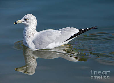 Photograph - Alone On The Pond by David Millenheft