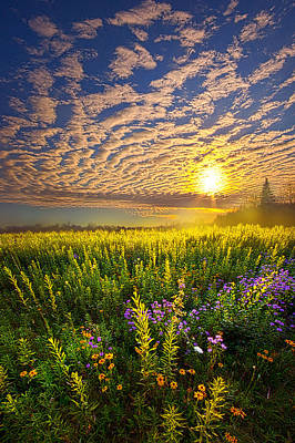 Photograph - Alone With Nature by Phil Koch