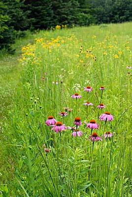 Cone Flower Photograph - Along A Prairie Path by Larry Ricker