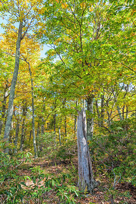 Photograph - Along Blue Ridge by John M Bailey