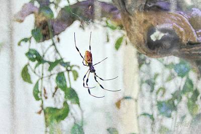 Photograph - Along Came A Spider by Bonnie Follett