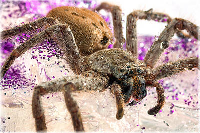 Photograph - Along Came A Spider by Tim Nichols