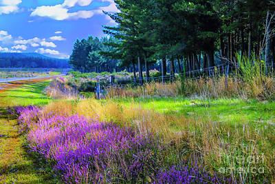 Photograph - Along Lavender Road by Rick Bragan