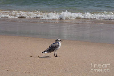 Seagull Photograph - Along On The Beach by Zina Stromberg