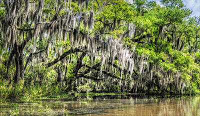 Photograph - Along The Bayou by Andy Crawford