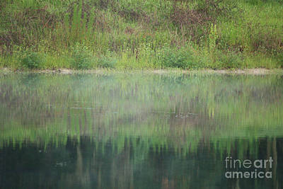 Green Photograph - Along The Edge Of The Pond by Carol Groenen