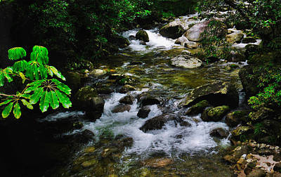 Photograph - Along The Gorge - Mossman Gorge, Far North Queensland, Australia by Lexa Harpell