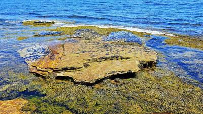 Photograph - Along The Shore - Maria Island by Lexa Harpell