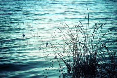 Photograph - Along The Shores by Debra Forand