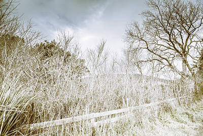 Leafless Tree Photograph - Alonnah Ice Landscape by Jorgo Photography - Wall Art Gallery