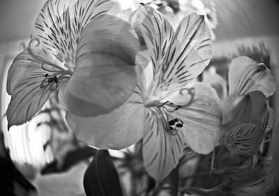 Photograph - Alosteria 12 by Simone Ochrym
