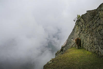 Photograph - Alpaca On The Edge by Jed Holtzman