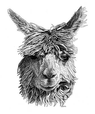 Drawing - Alpaca by Scott Woyak