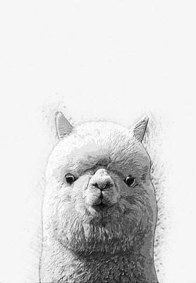 Digital Art - Alpaca  by Taylan Apukovska