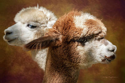 Photograph - Alpacas #1 by George Robinson