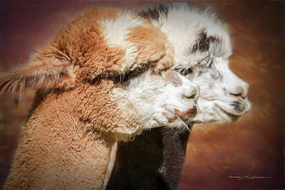 Photograph - Alpacas #2.  by George Robinson