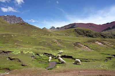 Photograph - Llamas In Painted Landscape by Aidan Moran