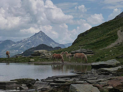 Photograph - Alps' Horses by Laura Greco