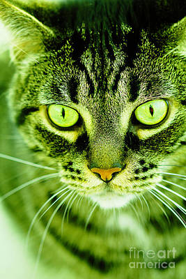 Photograph - Alpha Centauri Tabby Cat by Donna L Munro