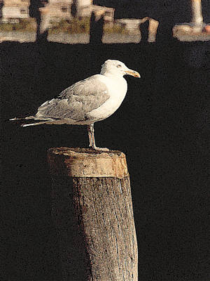 Painting - Alpha Gull by Paul Sachtleben