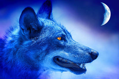 Blue Hues - Alpha Wolf by Mal Bray