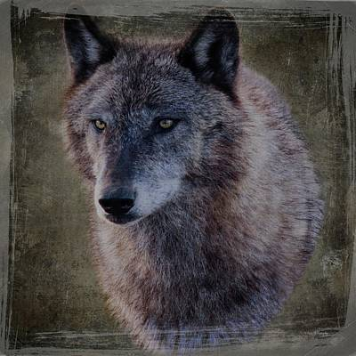 Photograph - Alpha Wolf Portrait by Teresa Wilson