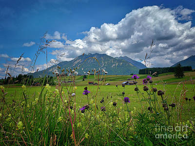 Photograph - Alpine Beauty by Edmund Nagele