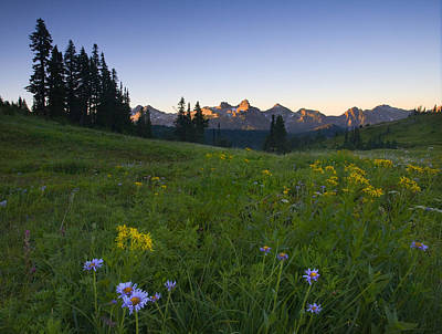 Asters Photograph - Alpine Dawn by Mike  Dawson