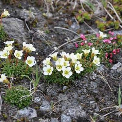 Photograph - #alpine #flowers #alpinegardens #trail by Patricia And Craig