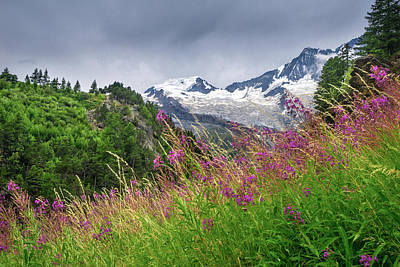 Photograph - Alpine Flowers by James Billings